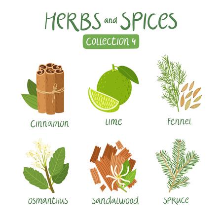 aceite de cocina: erbs y especias colecci�n 4. Para los aceites esenciales, la medicina ayurv�dica