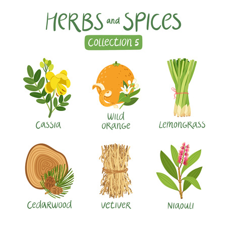 Herbs and spices collection 5. For essential oils, ayurvedic medicine Фото со стока - 44519942