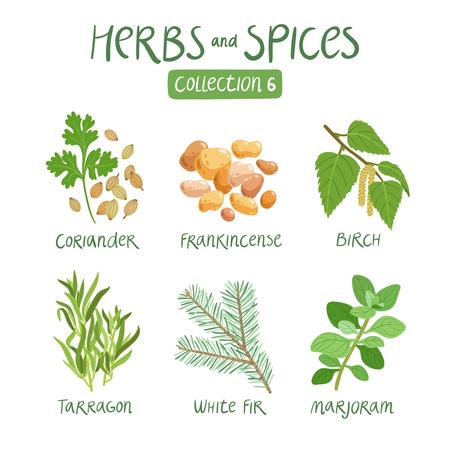 aceites: Hierbas y especias de recogida 6. Para los aceites esenciales, la medicina ayurv�dica