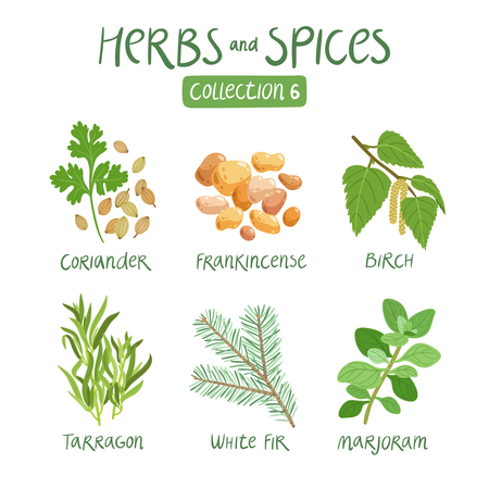 Herbs and spices collection 6. For essential oils, ayurvedic medicine Stock Illustratie