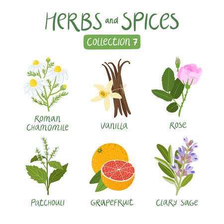essential oil: Herbs and spices collection 7. For essential oils, ayurvedic medicine Illustration