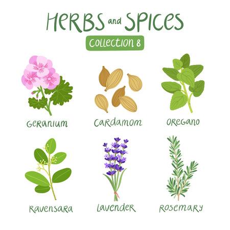aceite de cocina: Hierbas y especias de recogida 8. Para los aceites esenciales, la medicina ayurvédica Vectores