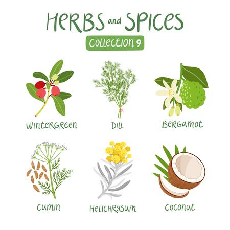 aceite de coco: Hierbas y especias de recogida 9. Para los aceites esenciales, la medicina ayurvédica Vectores