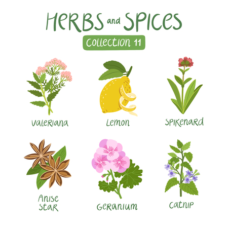 Herbs and spices collection 11. For essential oils, ayurvedic medicine  イラスト・ベクター素材