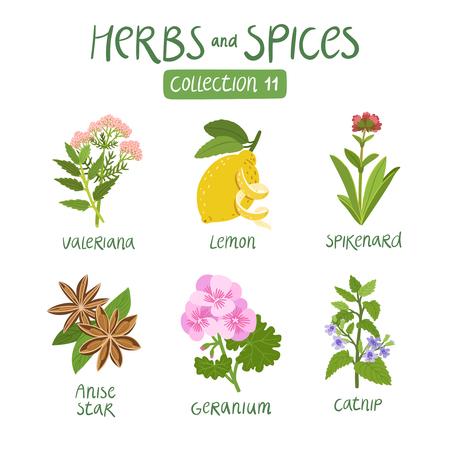 cobranza: Hierbas y especias de recogida 11. Para los aceites esenciales, la medicina ayurvédica