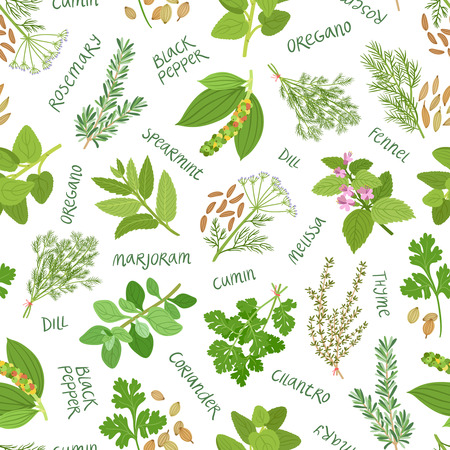 cilantro: Herbs and spices seamless pattern on white background