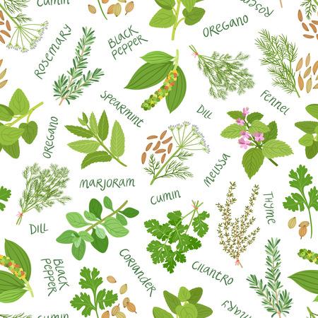 hierbas: Hierbas y especias patr�n sin fisuras en el fondo blanco
