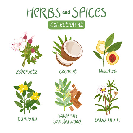 aceite de cocina: Hierbas y especias de recogida 12. Para los aceites esenciales, la medicina ayurv�dica Vectores