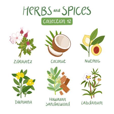 Kruiden en specerijen collectie 12. Voor etherische oliën, ayurvedische geneeskunde