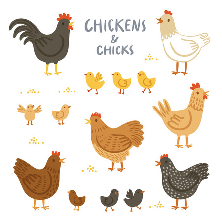animal cock: Chickens and chicks illustration set
