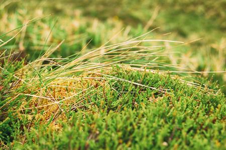 grass beautiful: Grass and moss closeup, beautiful background