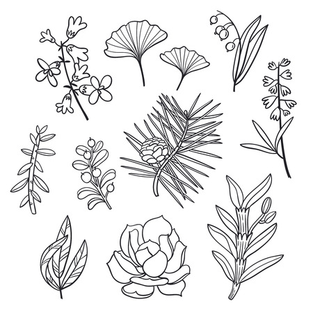 black and white plant: Floral set, outline isolated illustrations