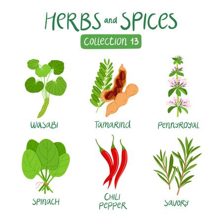 Herbes et épices collection 13. Pour la préparation des aliments, les huiles essentielles, la médecine ayurvédique Vecteurs