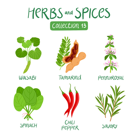 Herbs and spices collection 13. For food preparation, essential oils, ayurvedic medicine