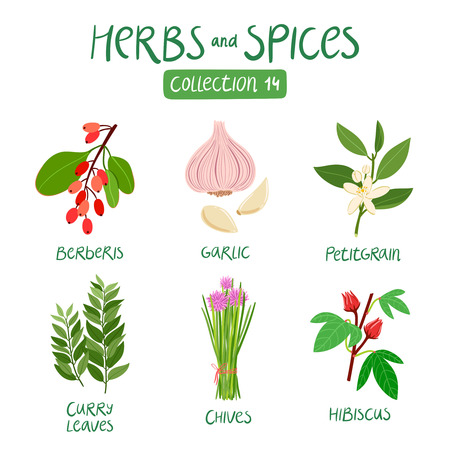 Herbs and spices collection 14. For food preparation, essential oils, ayurvedic medicine