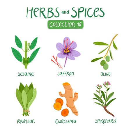 Kruiden en specerijen collectie 15. Voor de bereiding van voedsel, etherische oliën, ayurvedische geneeskunde Stock Illustratie