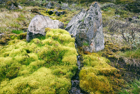 Green moss in the mountains of Jotunheimen national park