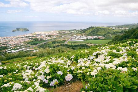 Stunning view at the city with hydrangeas blossoms on a hill, Azores