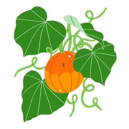 Cute pumpkin character plant with fresh green leaves, vector illustration, isolated on white Иллюстрация