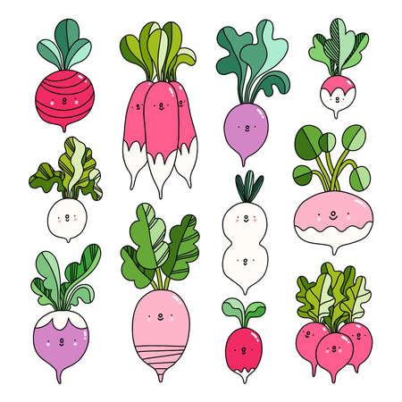 Fresh farm market radish, different types, cute cartoon illustration vector characters collection
