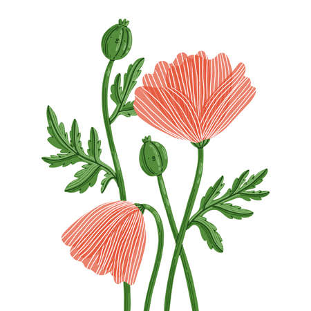 Cute cartoon red summer poppy flowers characters, isolated vector illustration Иллюстрация