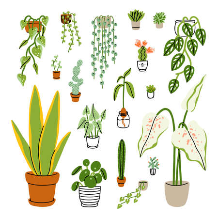 Collection of 18 different exotic home plants isolated on white, vector illustrations