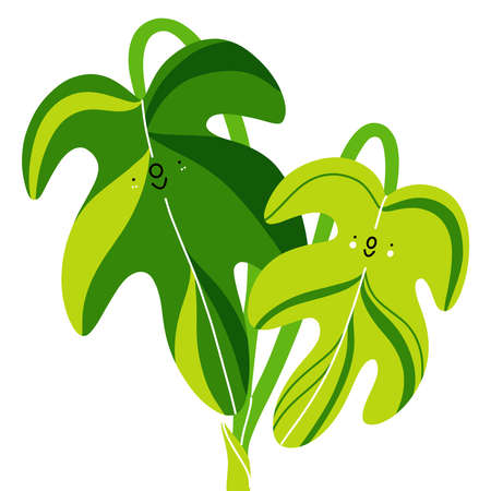 Two fresh green philodendron leaves, aroids cartoon vector illustration for all plant lovers, isolated on white background 向量圖像
