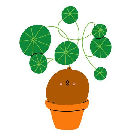 Stephania erecta cute cartoon home plant vector illustration, isolated on white background 向量圖像