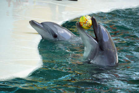 Dolphin show in the dolphinarium of Crimea.