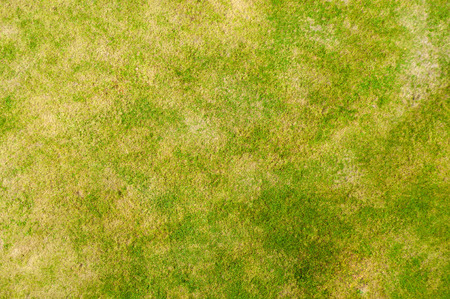 grass field from above. Field Of Grass View From Above Stock Photo - 33240330 Field L