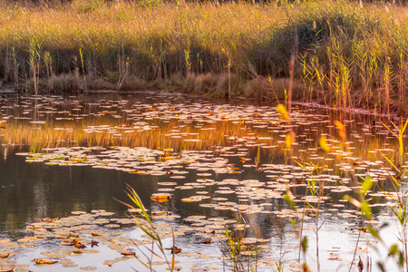 Autumn sunset on a pond with water lilies in Medoc region near Bordeaux France.