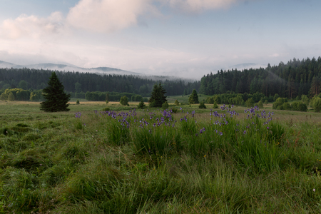 evaporating: Great mountain meadow with evaporating water after rain