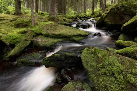tributary: Small river in the middle of an overgrown with moss forest Stock Photo