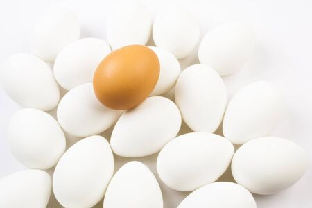 nonconformity: One organic brown egg among a group of bleached white eggs.