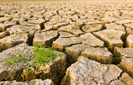 barren: Cracked earth with grass , metaphoric for climate change and global warming.