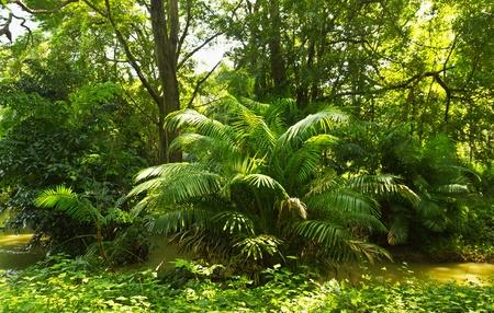 Tropisch regenwoud jungle in Thailand Stockfoto - 9782344