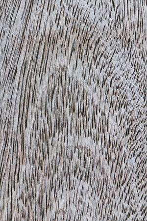stock agency: Legno esponendo con texture di venatura del legno di alta quota.