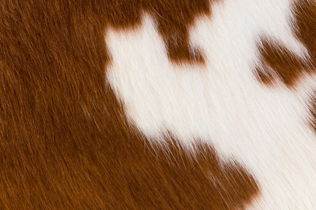 pelt: Cow hlde background Stock Photo