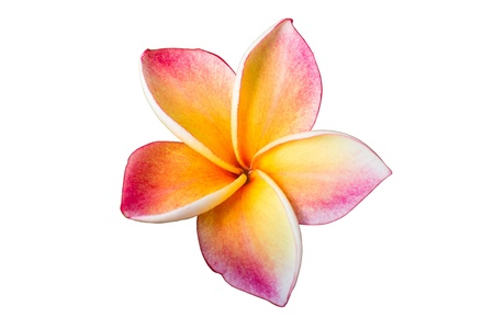 Lan thom flower on white background photo