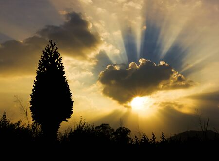 Image of sun shine through rain cloud and christmas tree silhouette Stock Photo - 10658285