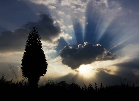 Image of sun shine through rain cloud and christmas tree silhouette Stock Photo - 10695850