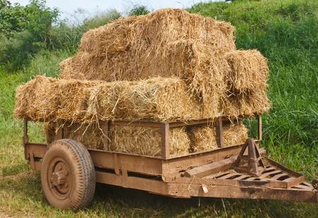 Hay wagon is piled high with fresh cut hay or straw
