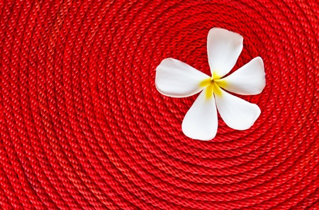 Lan thom flower on roll red rope photo
