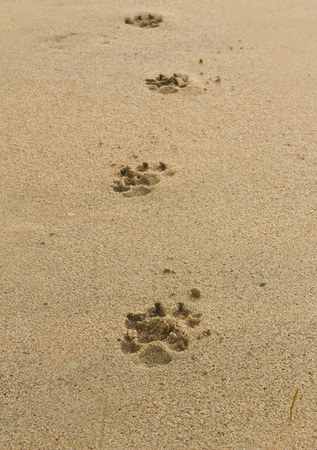 dogs footprints on the beach Stock Photo