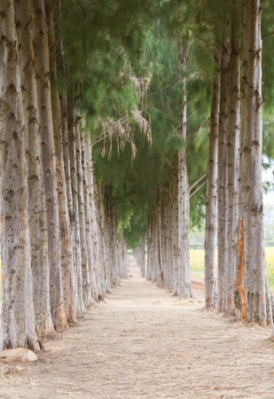 sideway: Pathway with pine tree pattern on sideway Stock Photo