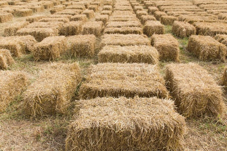 Field with bales of hay or straw countryside at harvest time photo