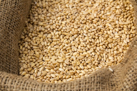 distillers: Corncrop  in sack  Ready for animal feed Stock Photo