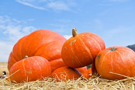 Pumpkins  in farm rural country field produce harvest holiday photo