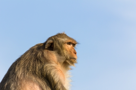Macaque monkey portrait in Thailand Stock Photo - 17033624
