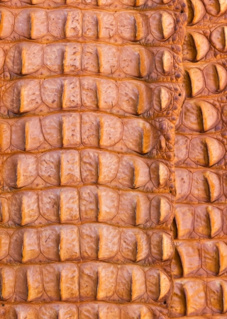 Close up shot of Alligator skin texture   The cayman leather Stock Photo - 18153021